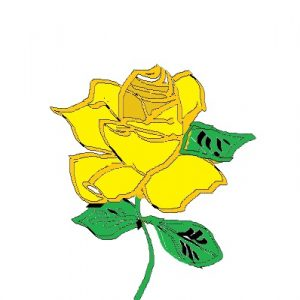 Yellow drawn rose with green leaves